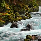 Wilderness by JennyRainbow