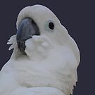 Blue Eyed Cockatoo by taiche