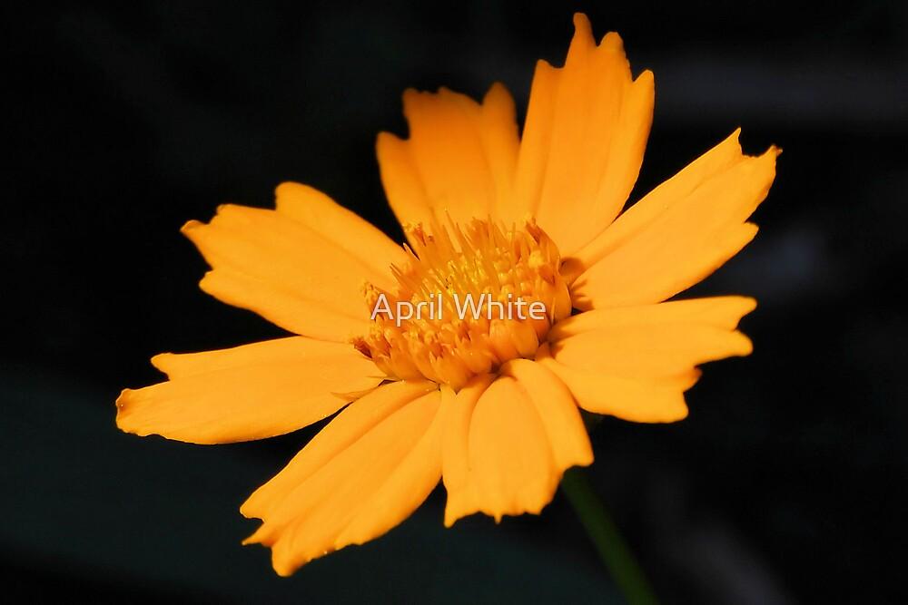 Golden Glow by April White