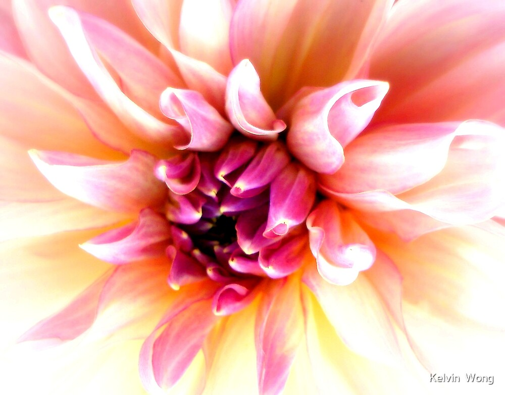 Dahlia by Kelvin  Wong