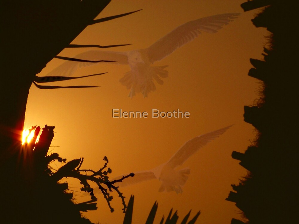 UNITY by Elenne Boothe
