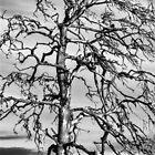 Still Standing - black edition by Matti Ollikainen