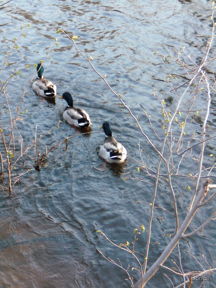 Three Lil' Duckies All in a Row by BonEll