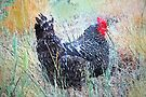 Rogue Chicken by Betsy  Seeton
