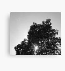 Monochrome - Trees Canvas Print