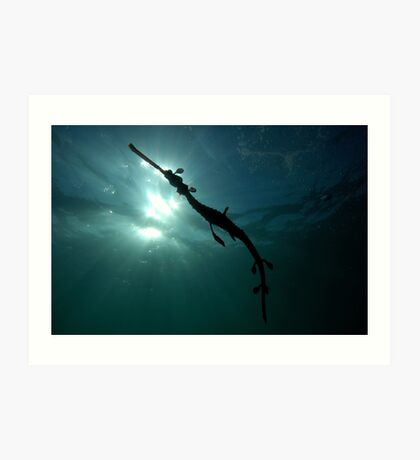 Seadragon Silhouette Art Print
