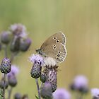 Ringlet by cuprum