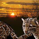 Fire Leopard by Bonnie Sandy