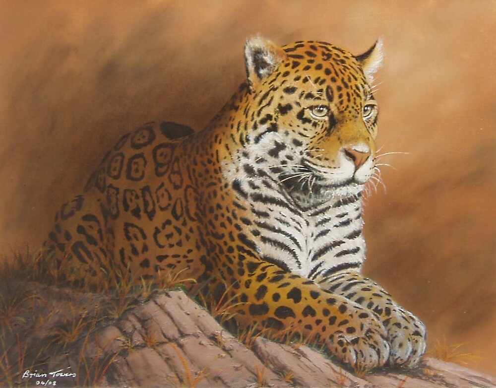 BIG SPOTTY CAT by Brian Towers