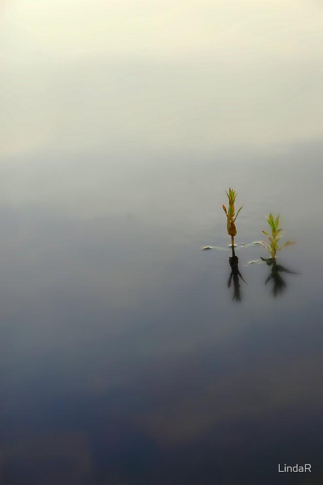 Still... by LindaR