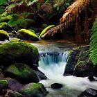 Regenwald von Angelika  Vogel