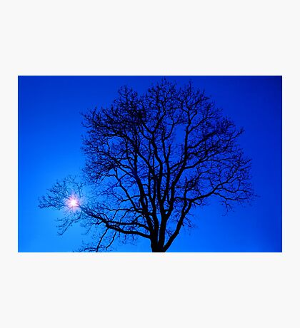 Tree in blue sky Photographic Print