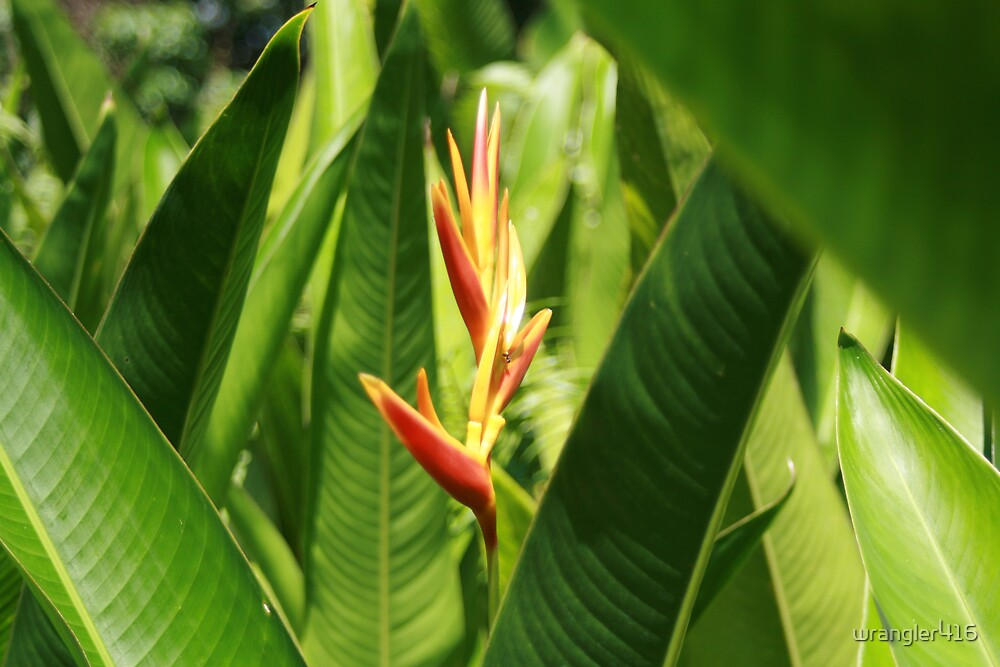 interesting flower by Kara Temple