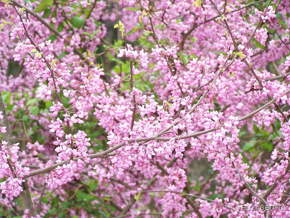spring  by ELIZABETH B
