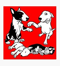 English Bull Terrier Family  Photographic Print