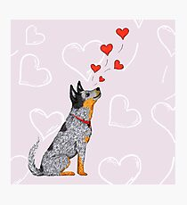 Australian Cattle Dog, Blue Heeler (Floating Hearts), by Artwork by AK Photographic Print