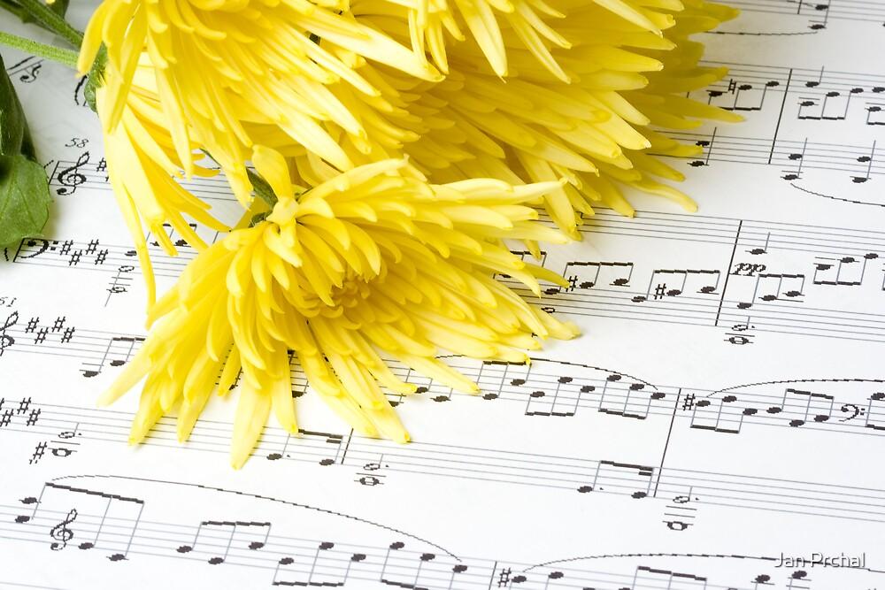 chrysanthemum laying on sheet music by Jan Prchal