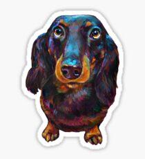 Roxy the Dachshund by Robert Phelps Sticker