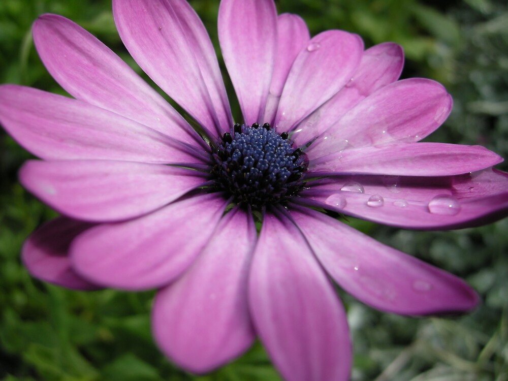 flower by michael anthony