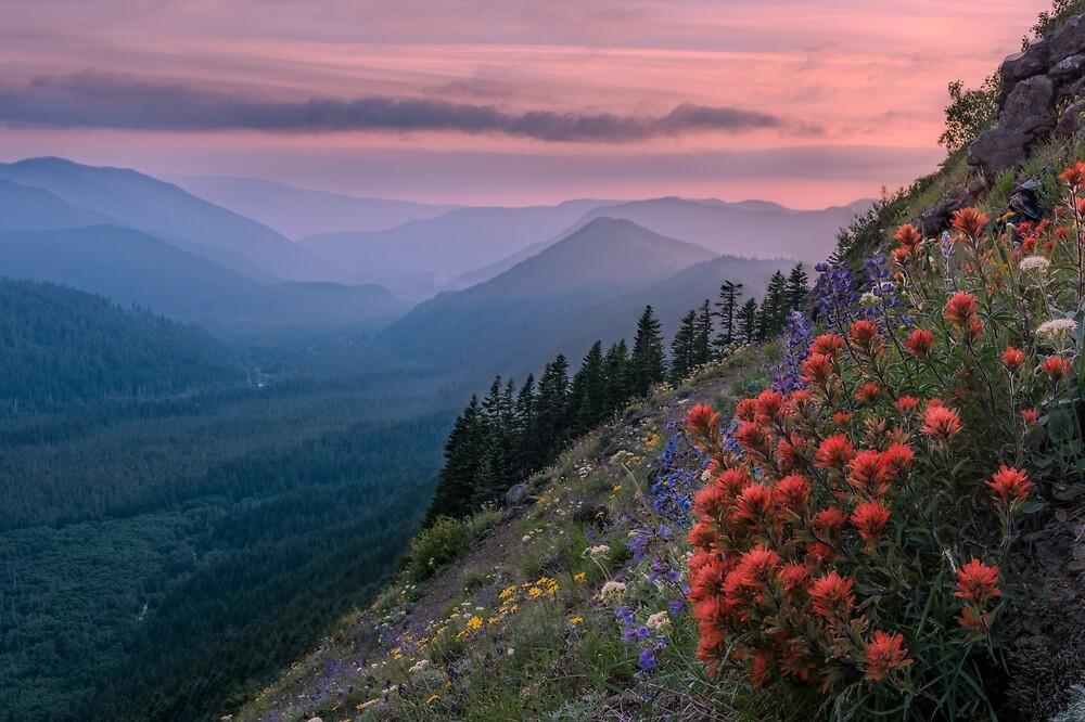 Wildflowers on Mount Hood, Oregon by mattmacpherson