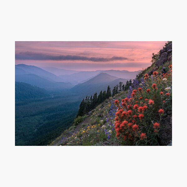Wildflowers on Mount Hood, Oregon Photographic Print