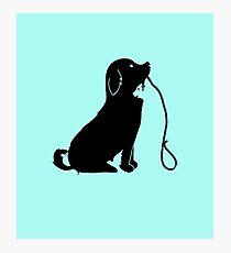 Animals Photographic Print
