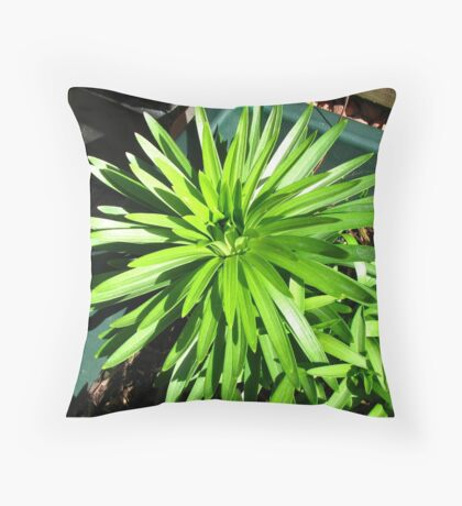 Green and Gorgeous - Sunlit Lily Leaves Kissen