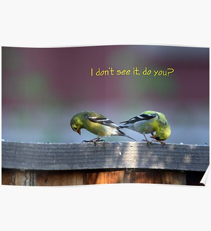 Goldfinch Bow Poster