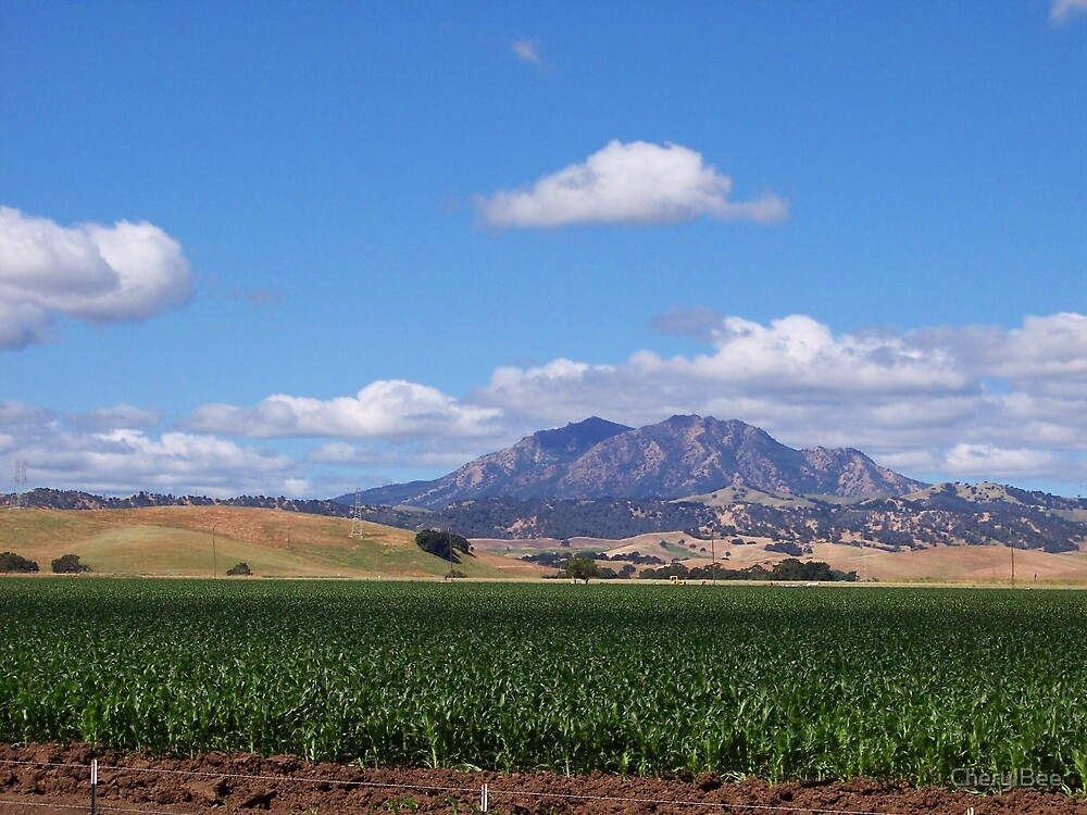 Mt. Diablo by CherylBee
