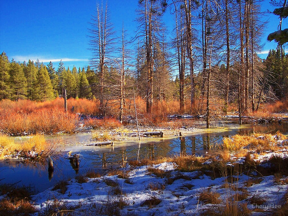 Trout Creek in Truckee, CA by CherylBee