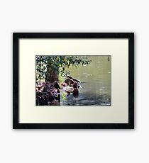 Lake tree Framed Print