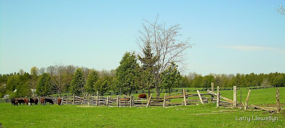 Were Not Fenced In.. by Larry Llewellyn