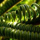 Hidden Jungle by Michael Reimann