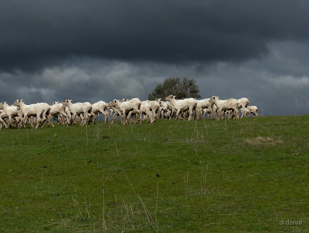 from a time of pastures green ... by drdanni