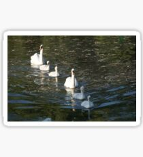 Mother swan with chicks in a lake  Sticker