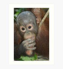 Baby Orangutang Art Print