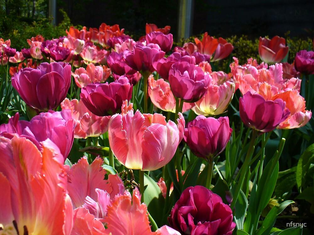 Flowers by nfsnyc