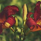 A Pair Painted Lilies by Sherry Hallemeier