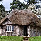 Bear House  by lynn carter