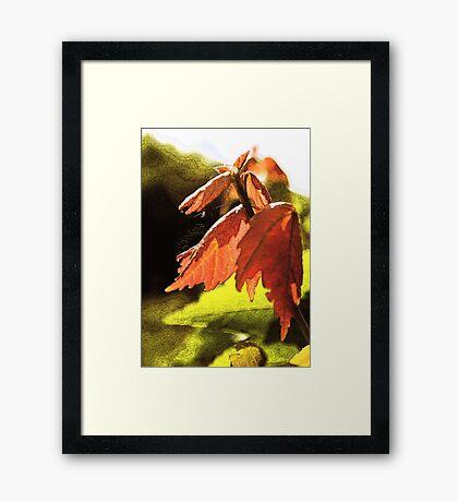 Spring Colours Framed Print