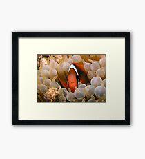 Nemo's Relative Framed Print
