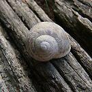 Snail Shell on Sleeper by Sandra Chung