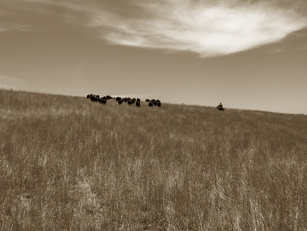 Moving the herd by ransam