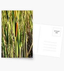 Bullrushes Postcards