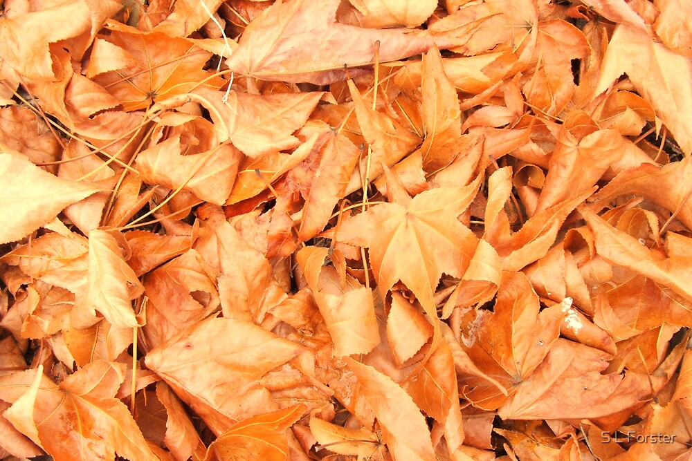 Fallen Leaves by S L Forster