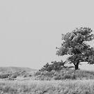 Lonesome Tree (Scottsbluff, Nebraska) by SERENA Boedewig