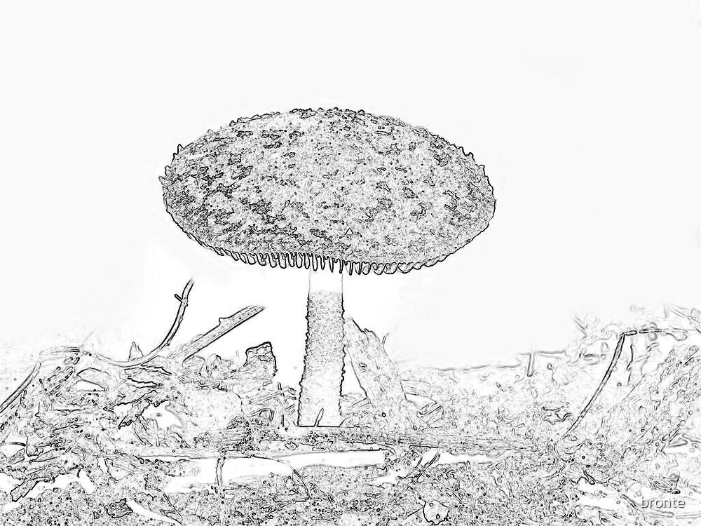 Mushroom 1 by bronte