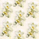 White Orchids by jacqi