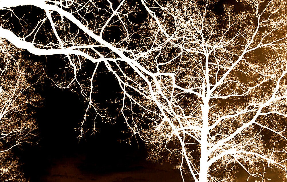 night life for trees by mpeakclewett