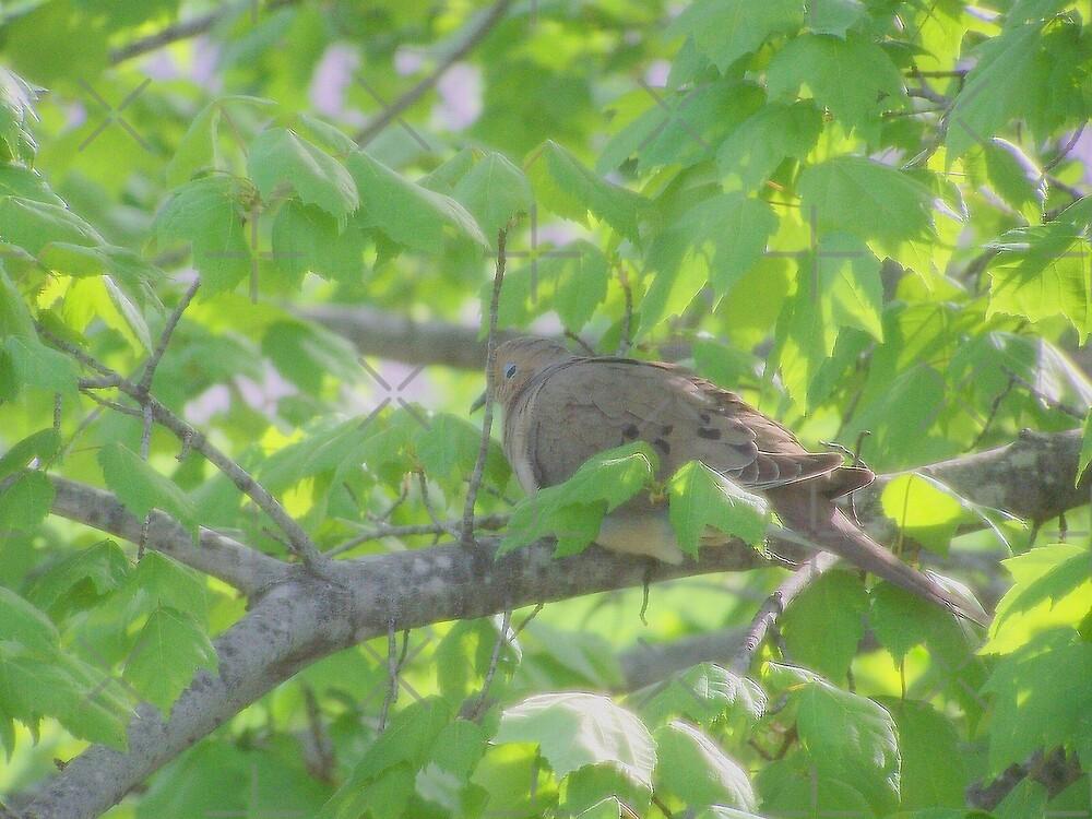 Dove Day by natnat7w